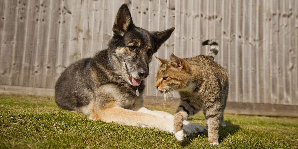 Dog and Cat hanging out by fence